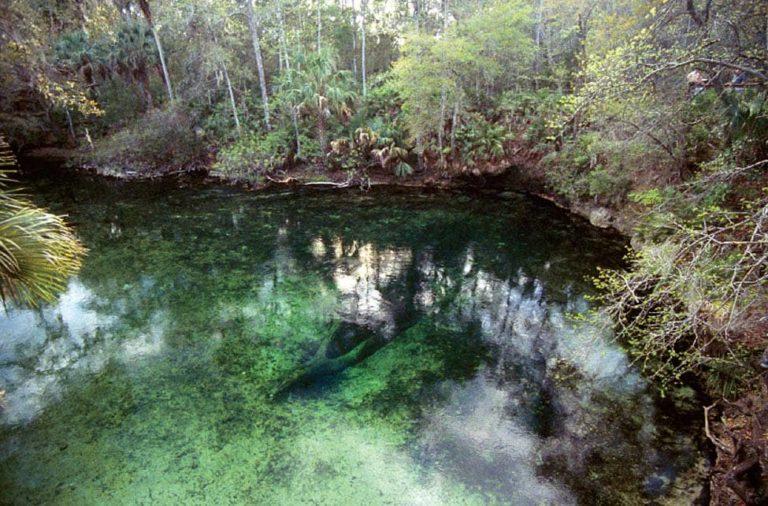 Volusia Blue Springs